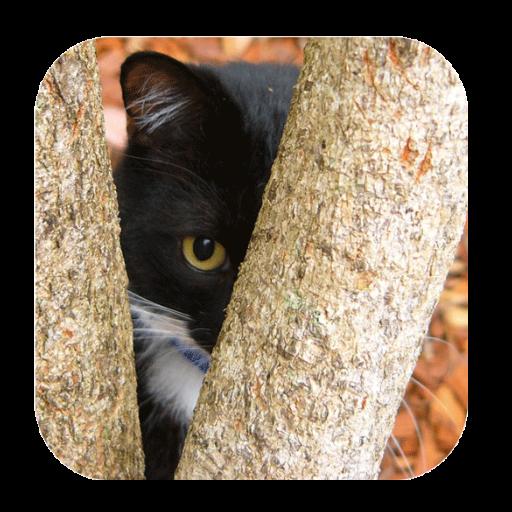 猫を見つける 解謎 App LOGO-硬是要APP