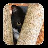 Trouvez Le Chat