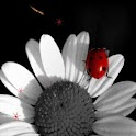 Lady Bug Butterfly Daisy LWP logo