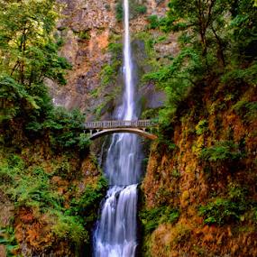 Multnomah Falls by Steve Rogers - Landscapes Waterscapes ( oregon, washington, multnomah falls, columbia river, falls, waterfall, multnomah,  )