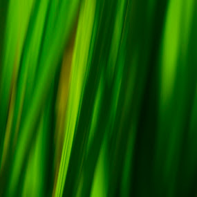 50 Shades of Green by Aiden Ogden - Nature Up Close Leaves & Grasses ( colour, nature, grass, color, green, colors, leaves, colours )