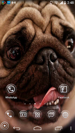 Dog Wallpapers in HD