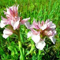 Flora y fauna de la peninsula iberica