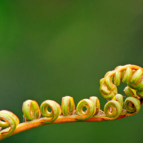 Fern by Yusop Sulaiman - Nature Up Close Other plants