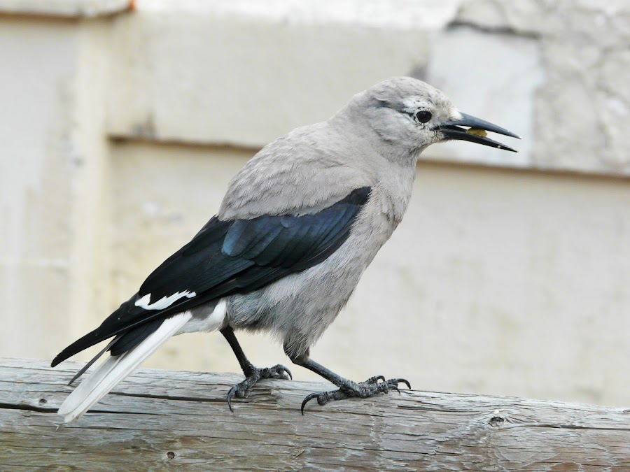 Bird  by Thakkar Mj - Animals Birds ( bird, nature, wings, street, animal,  )