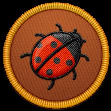 Lost Ladybug Project