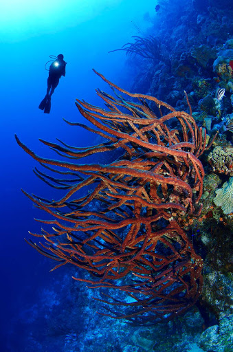 Curacao-diving-3 - Coral reefs near the shoreline, sunken ships and spectacular marine life make Curacao one of the best snorkeling and diving destinations in the Caribbean.