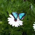 LiveButterflyWallpaper logo