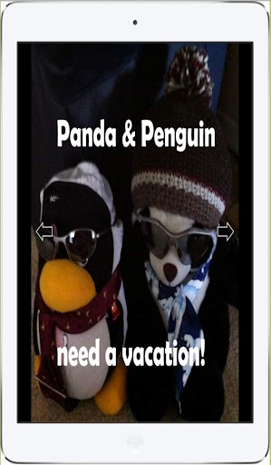 Panda Penguin need vacation