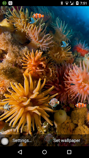 Coral reef free live wallpaper