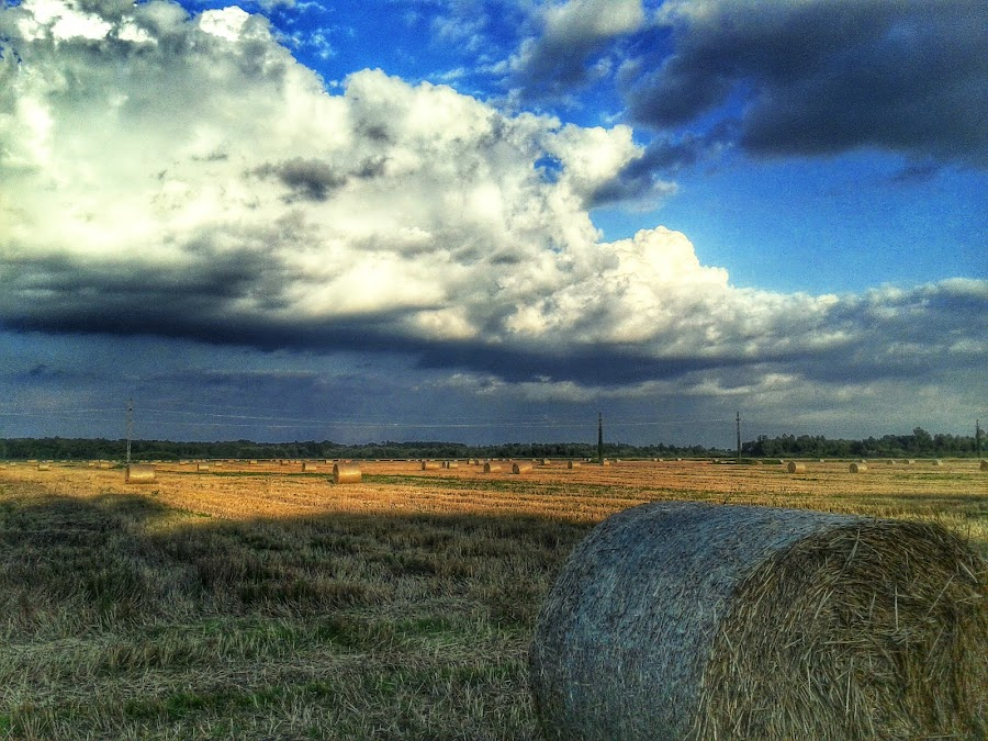 Field with Hay by Nat Bolfan-Stosic - Landscapes Prairies, Meadows & Fields ( field, sky, hay, cloudy, summer )