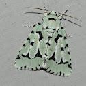 Green Marvel Moth