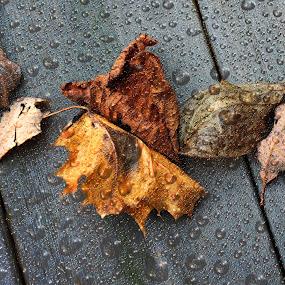 End of Season by Randi Grace Nilsberg - Digital Art Things ( water, water drops, leaf, leaves, ending, droplets, life, season, tree, autumn, fall, rain drops, wooden deck, rain )