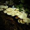 fungus..