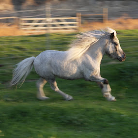Liberty by Heather Miller - Animals Horses