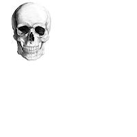 Basic Anatomy of a Skull 1.0