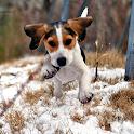 Beagles Dog Wallpapers logo