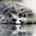 Cute Cat Backgrounds icon