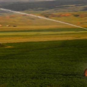 Lawn Sprinkler x 100 by J.c. Phelps - Landscapes Prairies, Meadows & Fields ( field, water, sprinkler, green, crop )