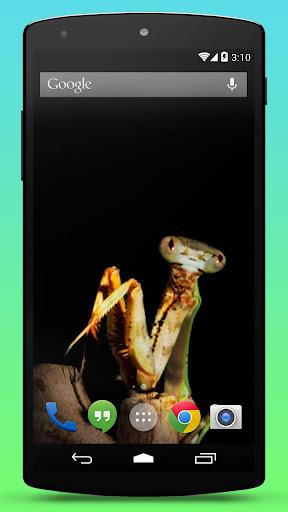 【免費個人化App】Praying Mantis Live Wallpaper-APP點子