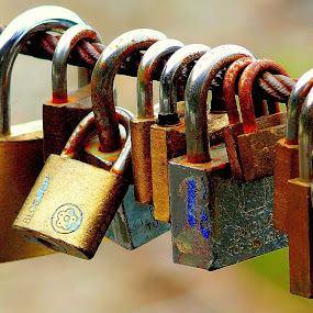 Love padlocks by Dunja Dretvić - Artistic Objects Still Life ( symbolise padlocks steel metal cable object seven padlock hanging row grouping lock stainless love locks )