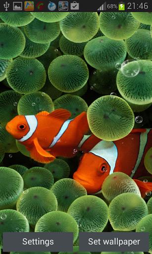 珊瑚礁動態壁紙