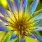 IMG_6361_PIX_0939_E.JPG