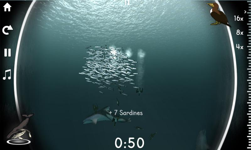 Sardine Run- screenshot