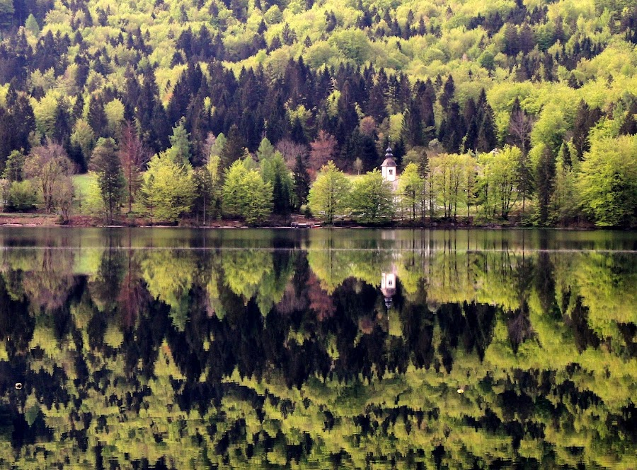 Reflection of colors by Jože Borišek - Uncategorized All Uncategorized ( bohinj lake )