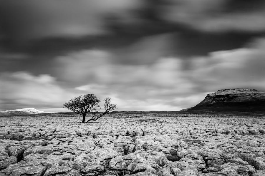 The lonely tree by Jani Rakkolainen - Black & White Landscapes