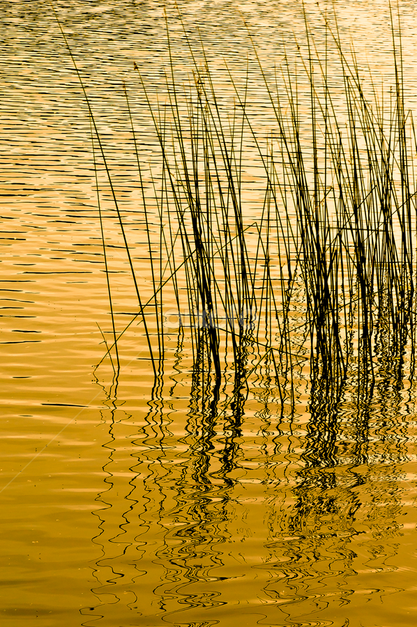 Waves & Lines by Jesus Giraldo - Nature Up Close Water ( water, reflection, concept, fineart, waves, plants )