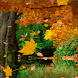 Autumns Leaves Live Wallpaper