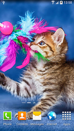 download cat live wallpaper for pc