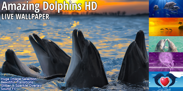TOP Dolphins HD Live Wallpaper - screenshot thumbnail
