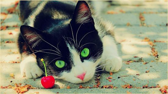 玩娛樂App|1047貓壁紙免費|APP試玩