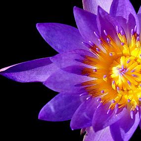 by Omrin Kamarudin - Flowers Single Flower