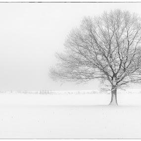 Alone in the cold by Jan Stupka - Landscapes Prairies, Meadows & Fields ( field, winter, tree, snow, czech republic, czech, landscape, bohemia )