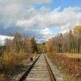 Afternoon dog walk by Sandy Davis DePina - Landscapes Forests ( dogs train tracks water forest woods clouds fall,  )