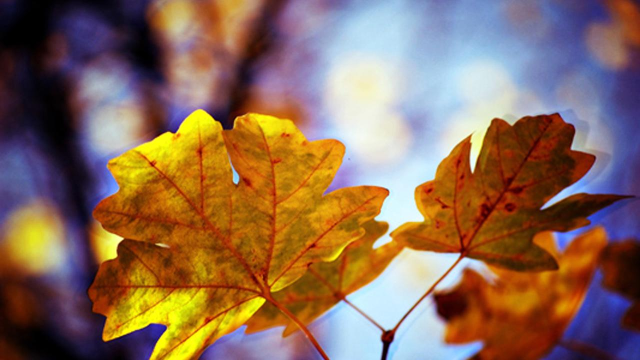 Autumn Mood Live Wallpaper - screenshot