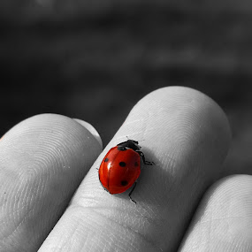 Ladybug in my hand by Lara Mérnökasszony - Instagram & Mobile Other ( nokia lumia 1020, mobile photography,  )