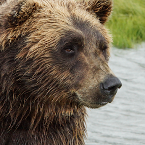 Bear country by Tracy Riedel-Dorsch - Animals Other Mammals