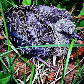 Poor thing :( my little brother almost killed him with the lawn mower by Kisha Webb - Animals Birds