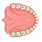 Dentist Pro Premium