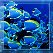 Tropic Fish HD Live wallpaper