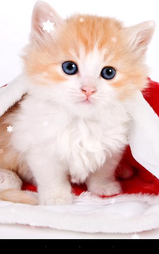 mod Christmas Cat Live Wallpaper 2.8.1 screenshots 2