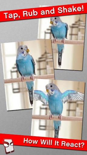 Angry Parakeet Free