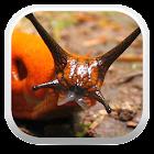 Terrestrial Mollusc Key icon