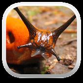 Terrestrial Mollusc Key