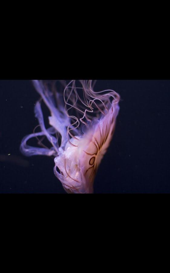 water jellyfish live wallpaper android apps on google play