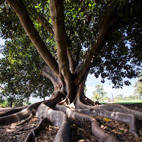 by Tracey Macnish - Nature Up Close Trees & Bushes ( socity6 )